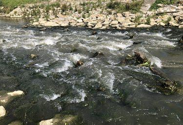Opatrenia na odstraňovanie migračných bariér na vodnom toku Myjava (stupeň v rkm 26,500)