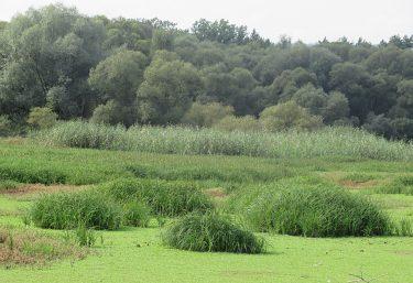 Dôležitosť mokradí a vody pripomína Svetový deň mokradí