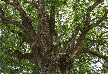 Hľadáme európsky strom s najsilnejším príbehom