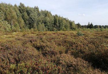 Svetový deň divej prírody sa zameria na lesy, ľudí a ich živobytie