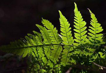 Webinár o globálnej environmentálnej kríze a ochrane biodiverzity v  systémovom pohľade