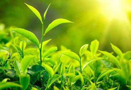 Využívajme spoločne informačný nástroj na podporu zelenej transformácie Slovenska